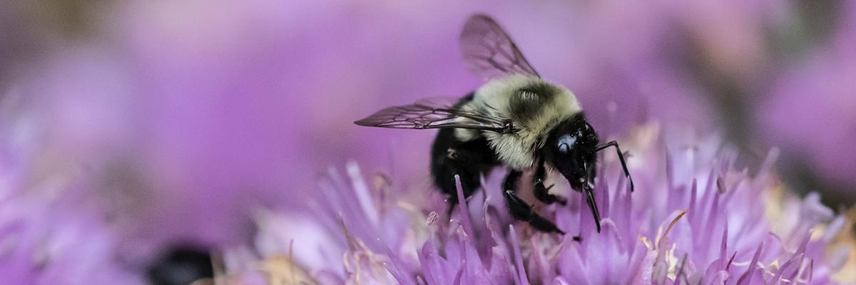 The Bee Conservancy